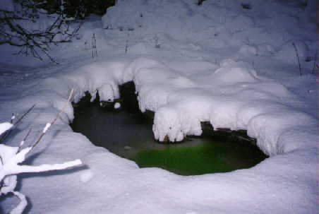 algae bloom in winter