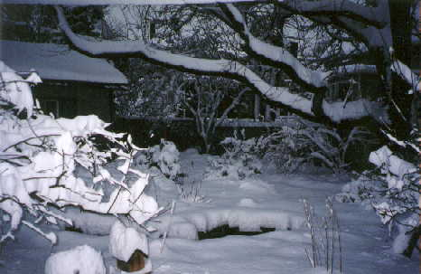 The pond and yard covered in snow